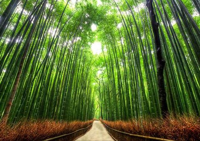 Staza Bambusa, Kjoto, Japan