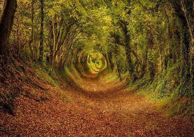 Šuma Ashdown, Zapadni Saseks, Engleska