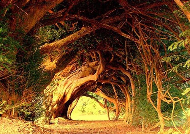 Tisin tunel, Karmarthenšir, Vels